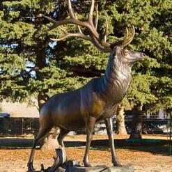 Bronze Bull Elk Sculpture-2