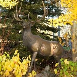 Bronze Bull Elk Sculpture-4