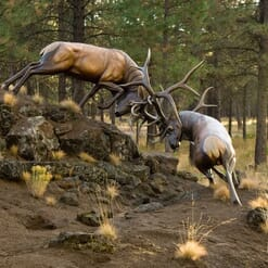 Bronze Bull Elk Sculpture - The Battle-3