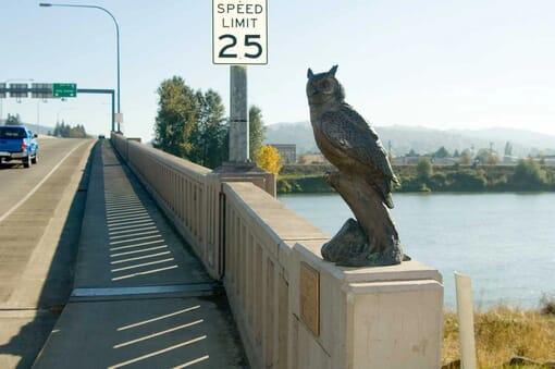 Bronze Great Horned Owl Sculpture-2