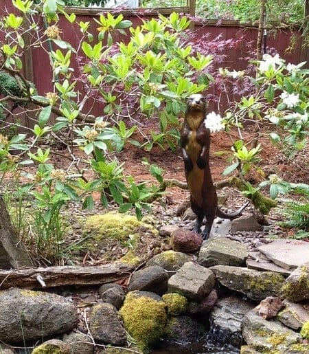 Bronze River Otter Sculpture - Scout-2