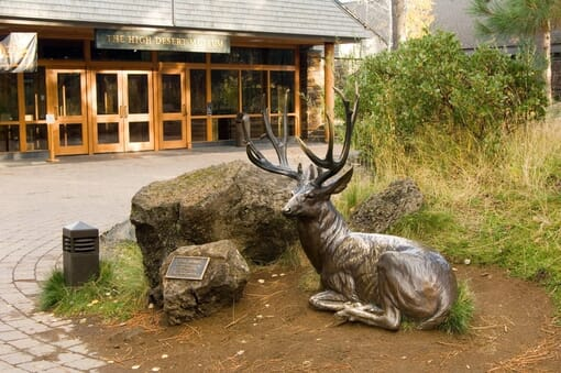 Bronze Mule Deer Sculpture - Noble Presence-1