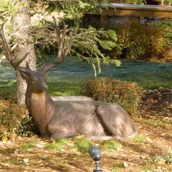 Bronze Mule Deer Sculpture - Noble Presence2