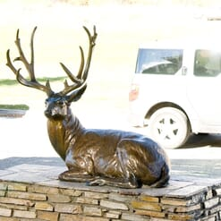Bronze Mule Deer Sculpture - Noble Presence-3